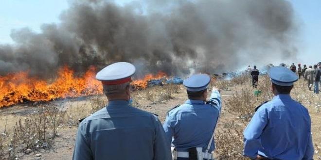 الجيش والدرك يسعيان لتشكيل فرقة خاصة لمحاربة الاتجار الدولي في المخدرات