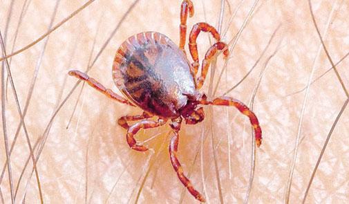 وزارة الصحة تنفي تسجيل أي إصابات بمرض حمى القرم-الكونغو النزفية بالمغرب