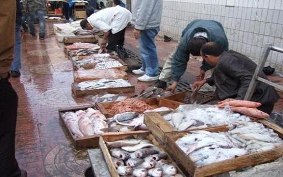 ارتفاع أسعار الأسماك يكذب تطمينات الحكومة