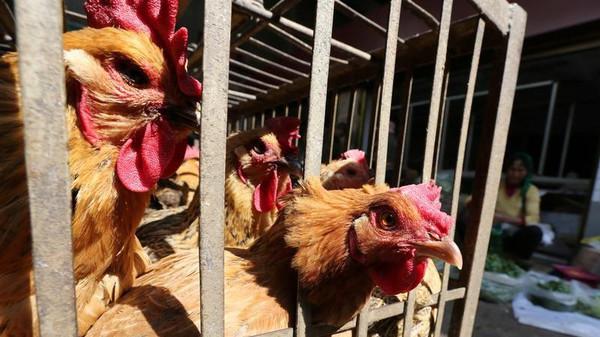 عشرات الوفيات والإصابات بإنفلونزا الطيور في الصين
