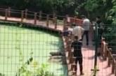 زائر يتحدى تمساح