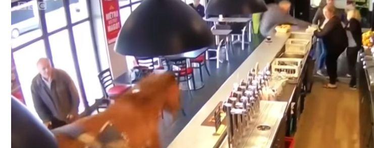 حصان يلج حانة