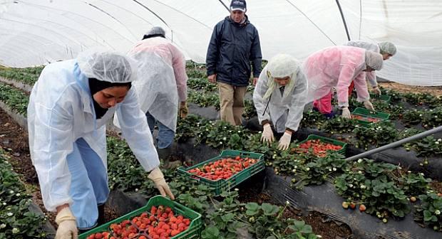 وزارة الشغل تكشف تصورها لحل ملف العاملات الفلاحيات بإسبانيا