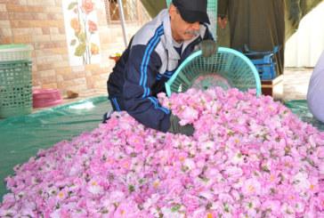 الفيدرالية البين المغربية للورد العطري تنظم مهرجانا دوليا للورود