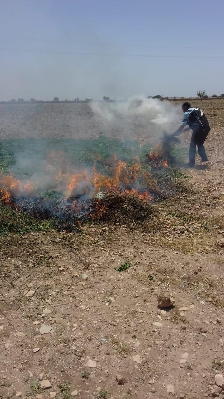 """خطير… ONSSA: تتلف حقول النعناع """"المسرطن"""" بعدد من مدن المغرب"""