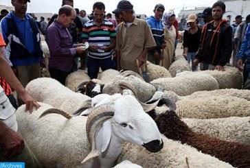 عيد الأضحى  1440… ترقيم حوالي 7 ملايين و400 ألف رأس من الأغنام والماعز