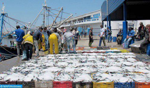 وزارة الفلاحة تطمئن… تموين الأسواق بالمنتوجات الفلاحية والسمكية سيتم بطريقة منتظمة ومستمرة