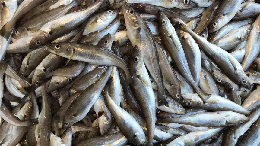 نفوق كمية كبيرة من الأسماك بواد قريب من الراشيدية