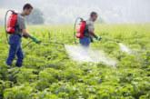 """بعد منعها بأوروبا… أونسا يعيد النظر في المبيدات الزراعية المتضمنة لمادة """"كلوربيريفوس"""""""