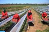 إعادة العاملات المغربيات اللواتي يشتغلن بهويلفا ابتداء من نهاية الأسبوع الجاري