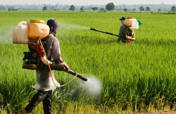 أونسا يعيد تقييم التراخيص الممنوحة للمبيدات الزراعية