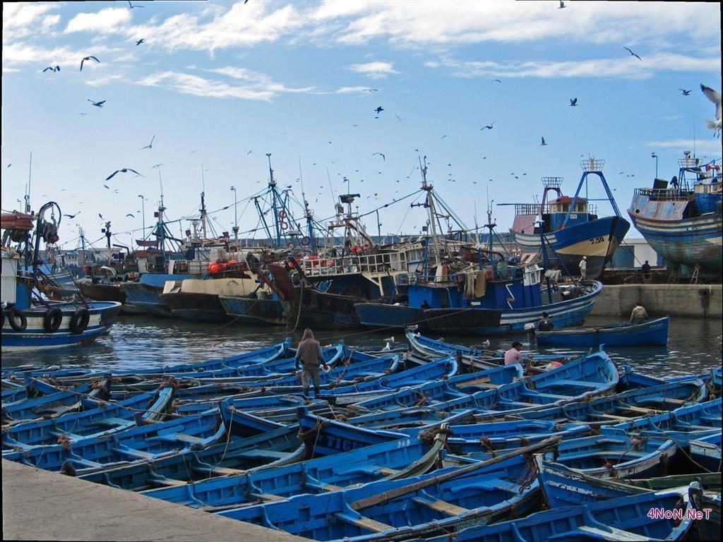 العيون… خرق قانون الصيد البحري يؤدي إلى إيقاف قارب للصيد