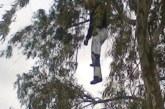 العثور على جثة شاب معلقة بشجرة بكلميم