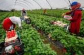 تعهدات بحماية العاملات المغربيات في الحقول الإسبانية من فيروس كورونا